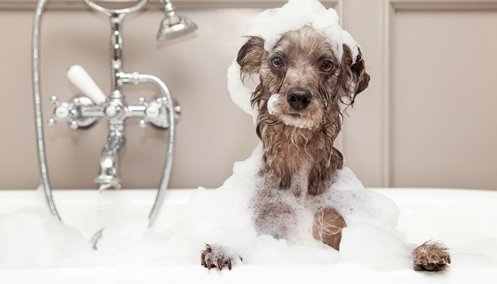 Kócos kutyakozmetika
